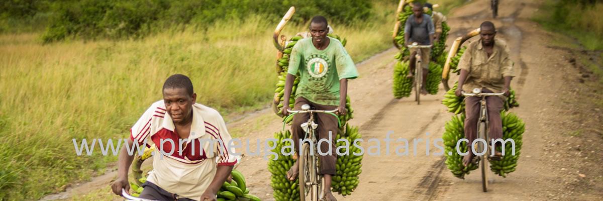 Agricultural Uganda Safaris