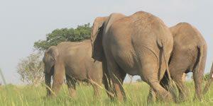 Aswa – Lolim Game Reserve