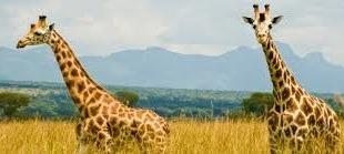 uganda -kidepo-safaris