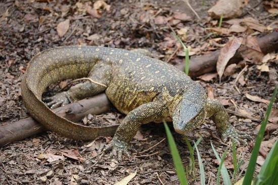 uganda-reptile-village-entebbe
