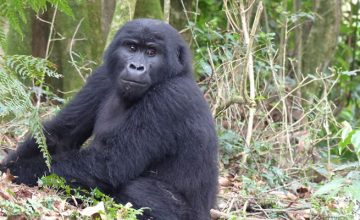 9 Days Gorilla Safari Holiday in Rwanda
