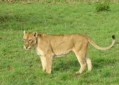 lion-murchison falls national park