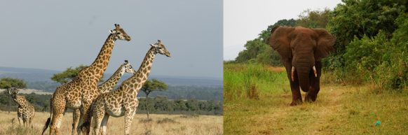 wildlife-at-akagera safari rwanda