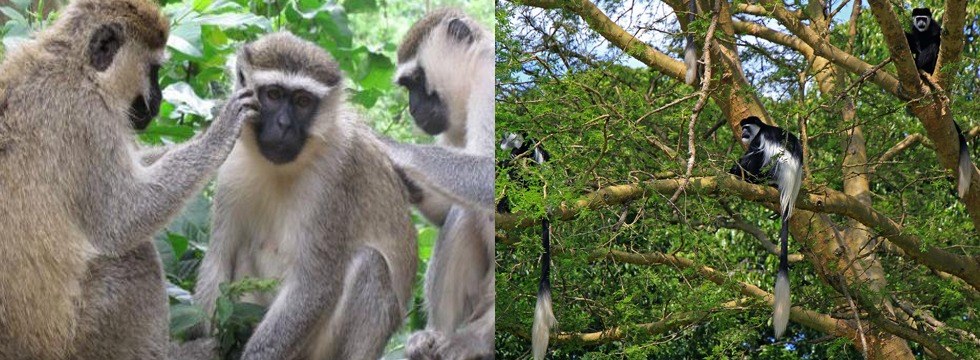 wildlife-at-kibale-forest -np
