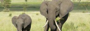 wildlife day , uganda safaris