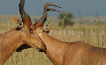 wildlife-murchison-np