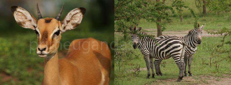 wildlife-tour-uganda