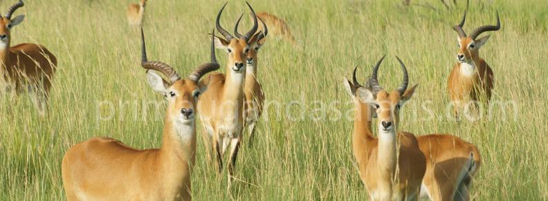 wildlife-uganda-tour